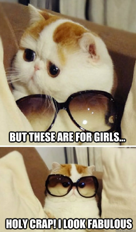but these are for girls, holy crap I look fabulous, premium cat wearing sunglasses