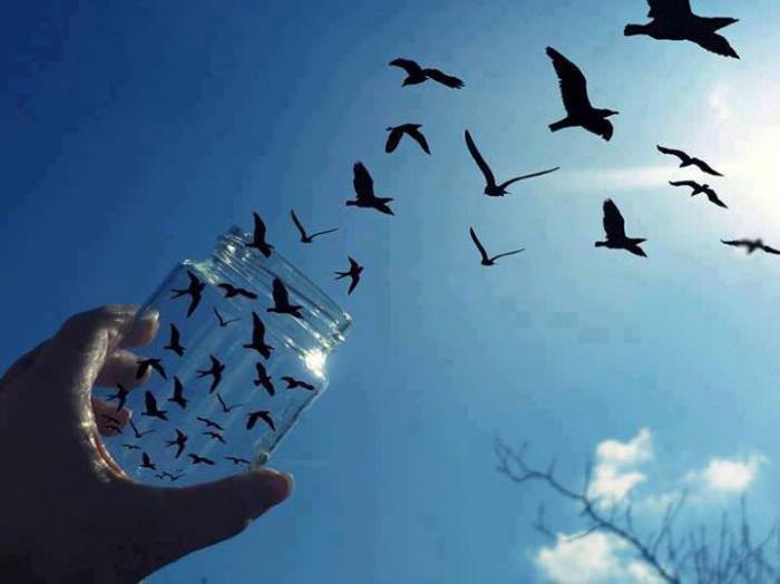 perspective, birds, jar, sky, cool