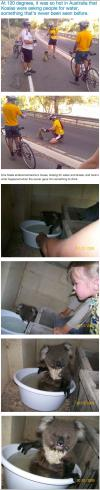 australia, hot, koala, story, water