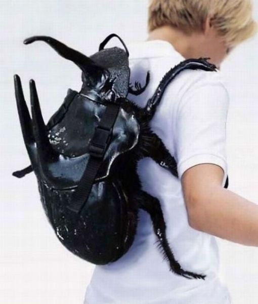 insect, beatle, nap sack, back sack, product, unique