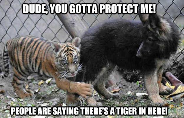 tiger, dude, dog, meme