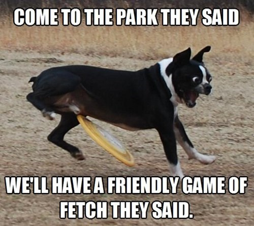 come to the park they said, we'll have a friendly game of fetch they said, freebie to the balls