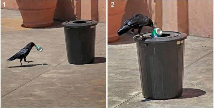 bird, litter, crow, recycling