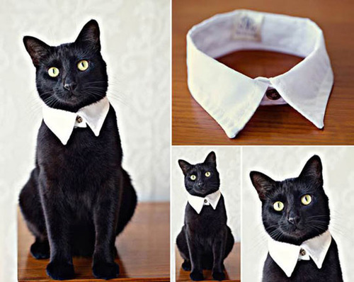 cute cat collar, product