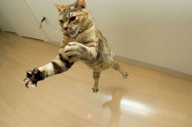 cat, matrix, timing, fly, catrix