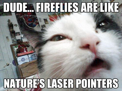 dude fireflies are like nature's laser pointers, stoned cat, meme