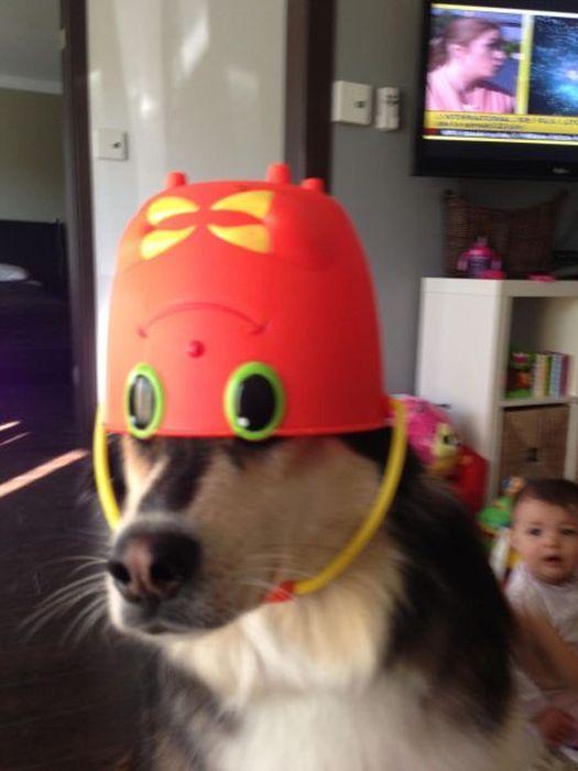 dog, bucket, hat, eyes, lol
