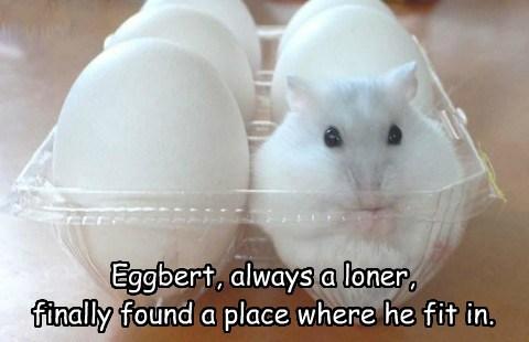 hamster, egg, totallylookslike, mouse, white, meme