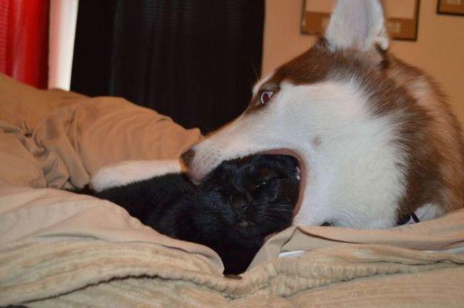 dog, cat, eat head