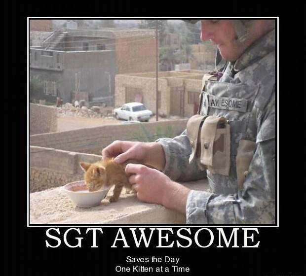 motivation, kitten, war, soldier