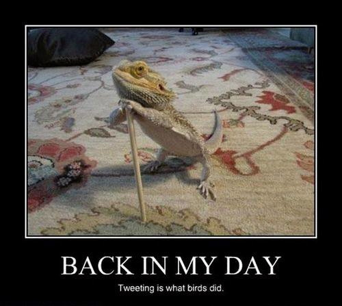 back in my day, tweeting is what birds did, old lizard on cane, motivation