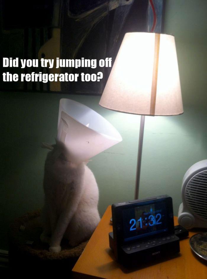 cat, lamp, lol, cone on head, refrigerator