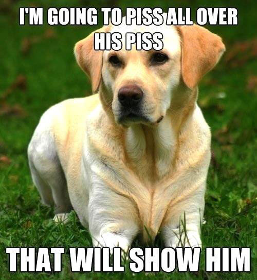 dog, logic, piss, meme