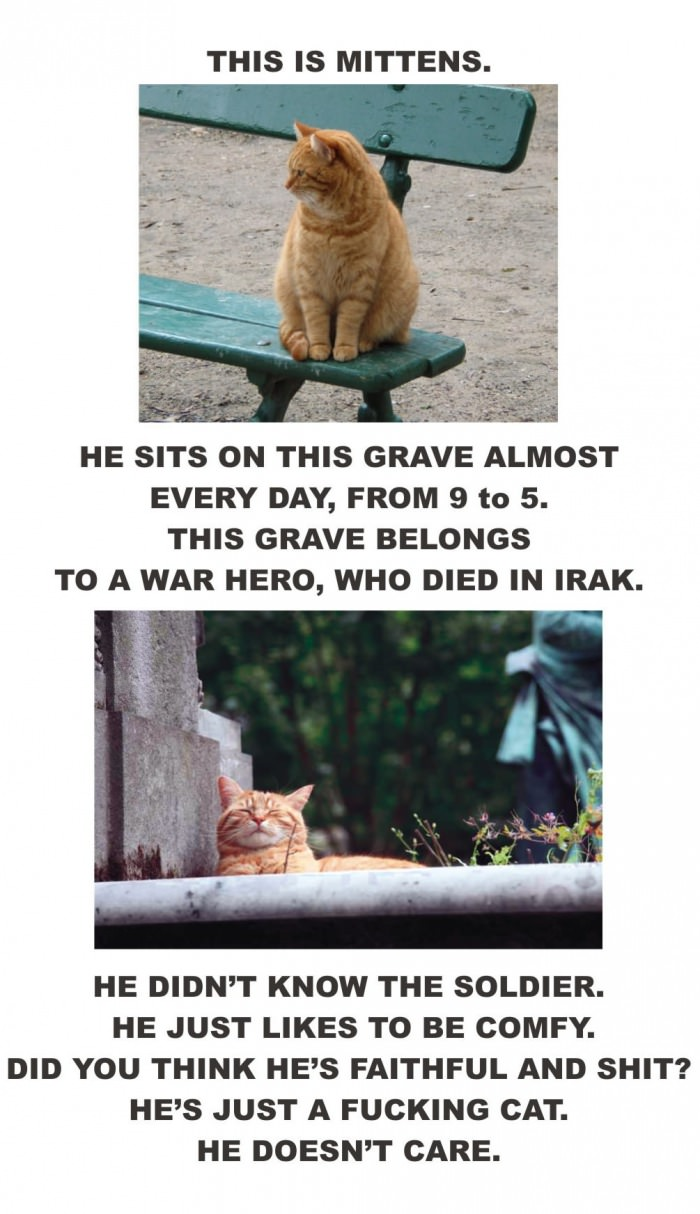 cat, grave, mittens, story, lol