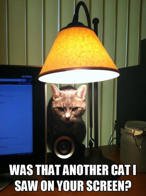 was that another cat I saw on your screen, angry lamp cat, meme