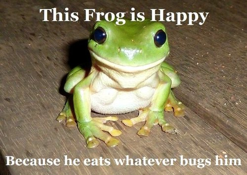 this frog is happy because he eats whatever bugs him, meme, wordplay