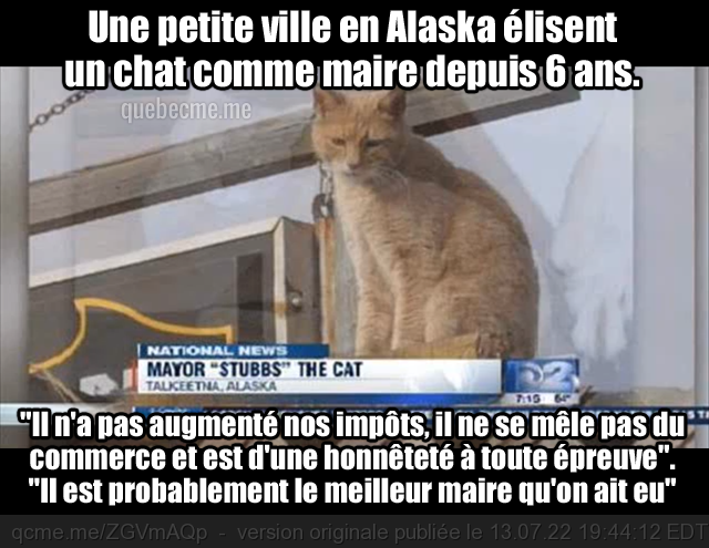 cat, mayor, french, alaska, meme, maire, chat