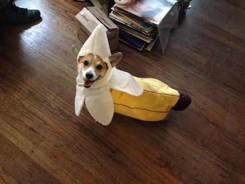 costume, dog, banana