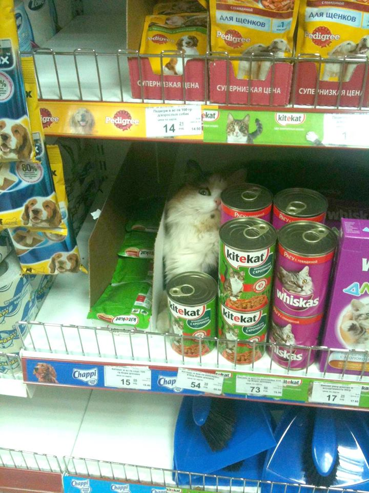 cat, food, grocery store, lol