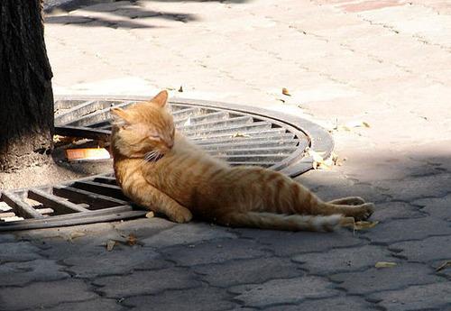 cat, laying down, catnip