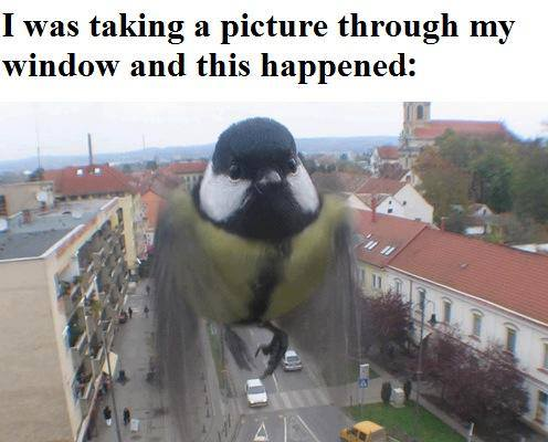 timing, bird, story, picture, giant, photobomb