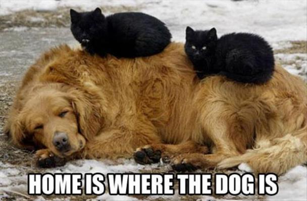 dog, cat, meme, home is where the dog is