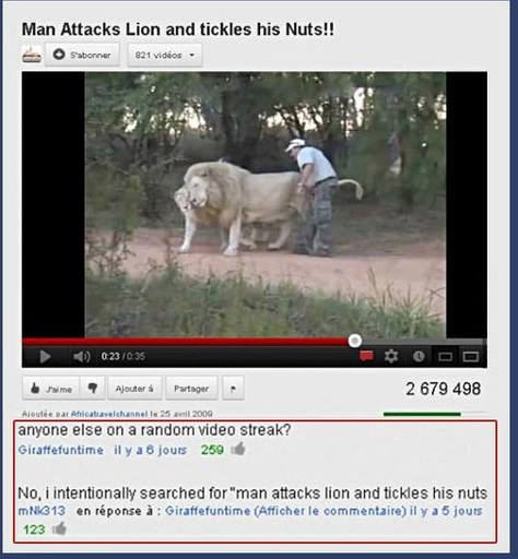 youtube, comments, man attacks lion and tickles his nuts
