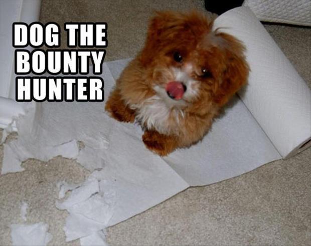 dog the bounty hunter, napkins, meme