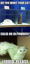 cat, solid, liquid, powder, phase, meme