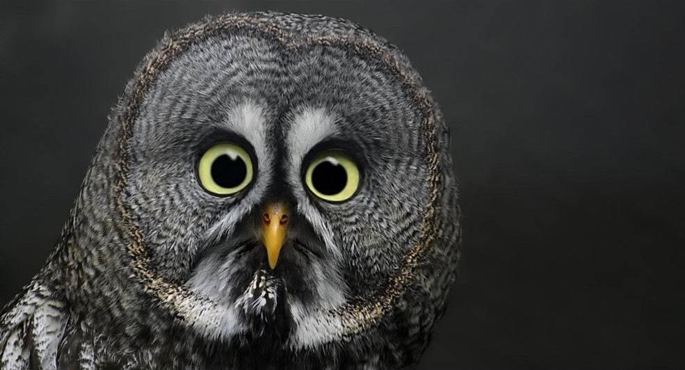 owl, eyes, surprised, worried