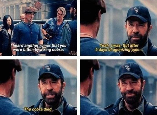 chuck norris, joke, king cobra