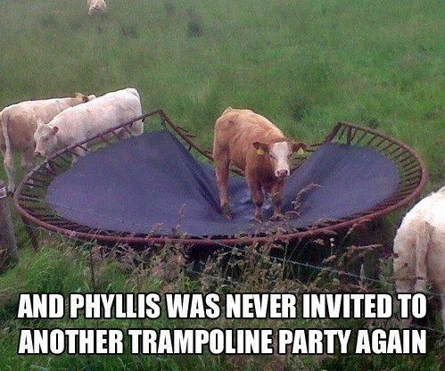 and phyllis was never invited to another trampoline part again, cow broke trampoline