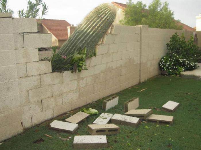 cactus, stone block fence, property damage