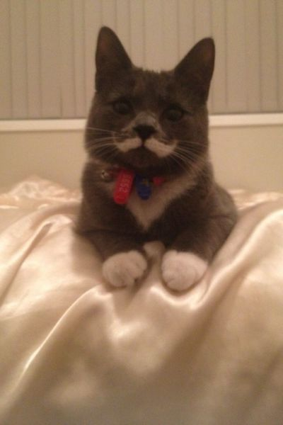 cat with a natural moustache, win