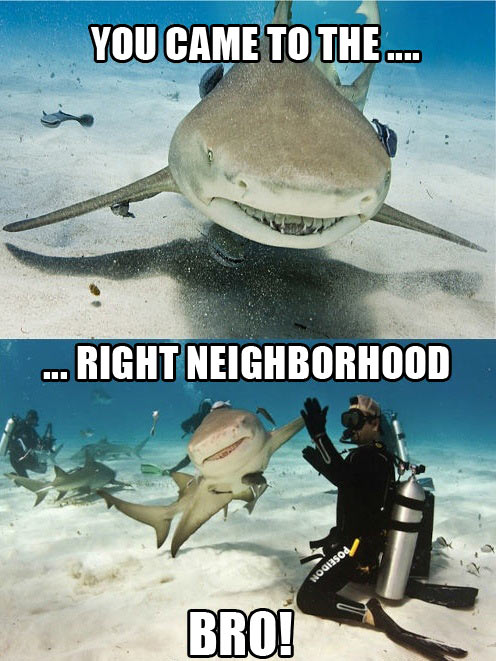 shark, high five, scuba diver, right neighbourhood