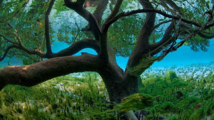 under water tree, cool, nature