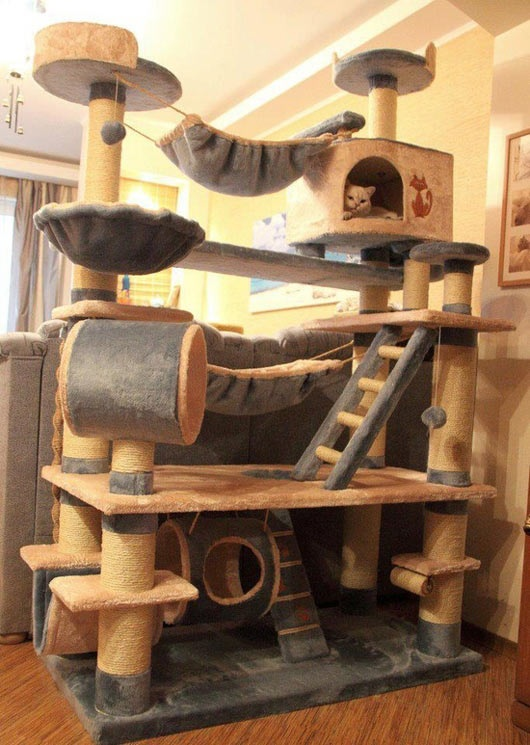cat castle, win
