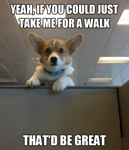 dog, work, office, meme, walk, that'd be great