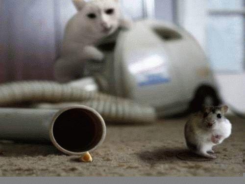 cat, mouse, bait, vacuum cleaner