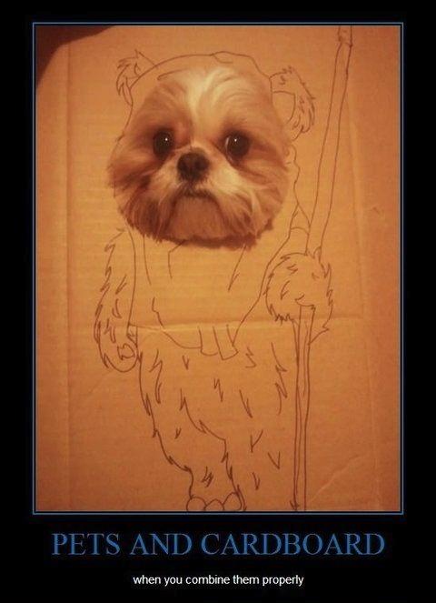 ewok, dog, face, cardboard, drawing, pet, lol