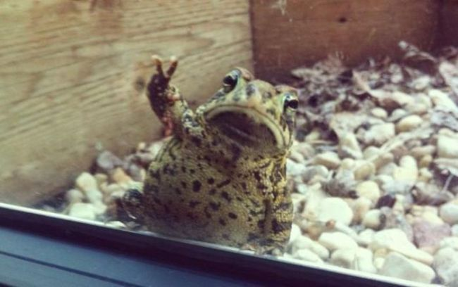 photogenic frog