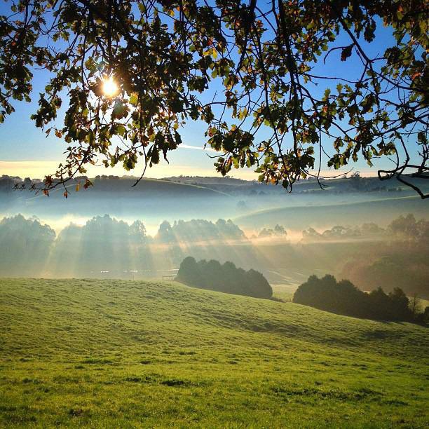 misty sunrise, mountains, trees, fog, scenery, nature