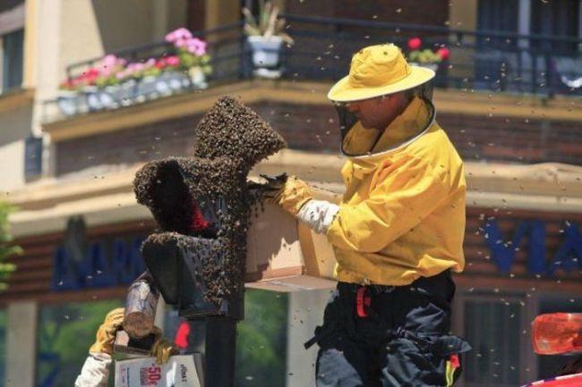 bees, nest, street light