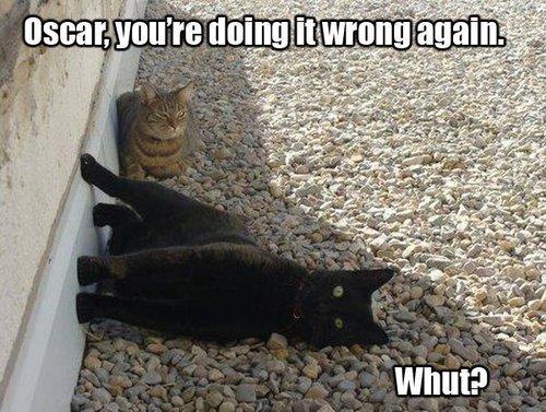 cat, meme, doing it wrong, derp