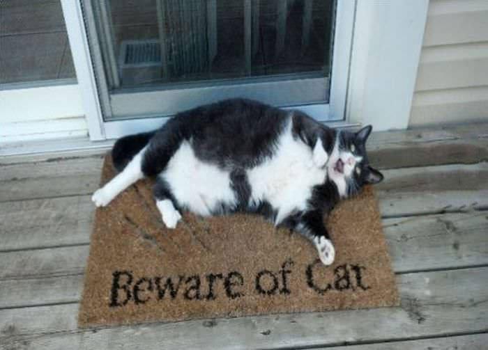 beware of cat, door mat, welcome mat