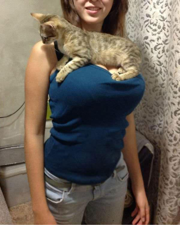 small cat laying across busty blond's chest, win