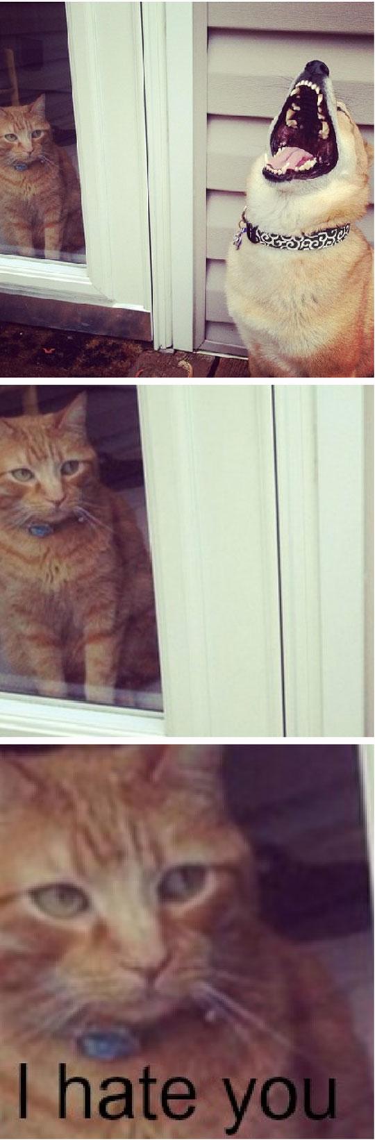 dog, cat, i hate you, outside