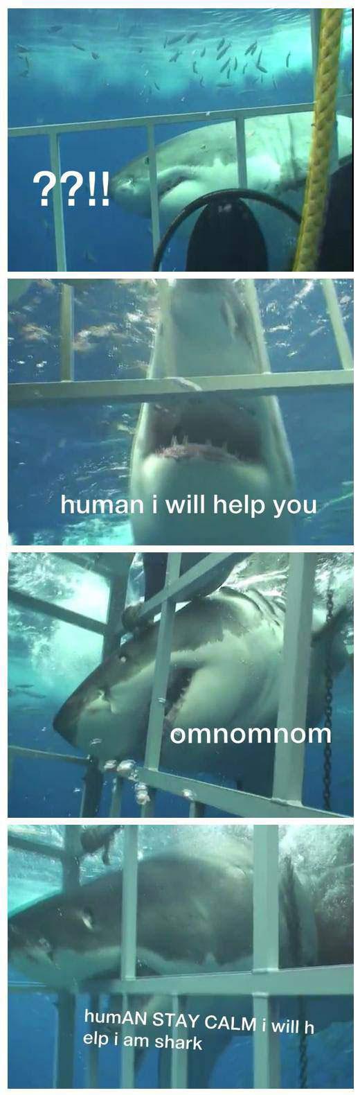 shark, human, lol, cage, scuba diving