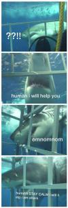 shark, human, lol, cage, scuba diving