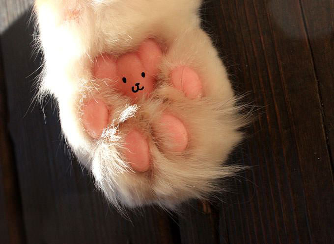 paws, teddy bear, cat, omg